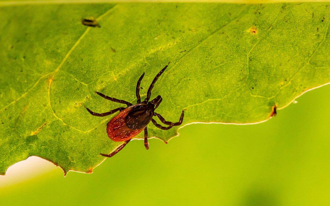 Gydytoja perspėja: laisvalaikį gamtoje gali apkartinti mirtina infekcija