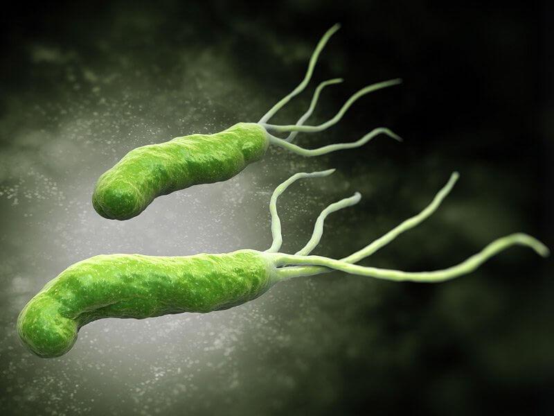 Helicobacter Pylori bakterija